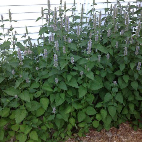 Naturally WILD | Minnesota Grown