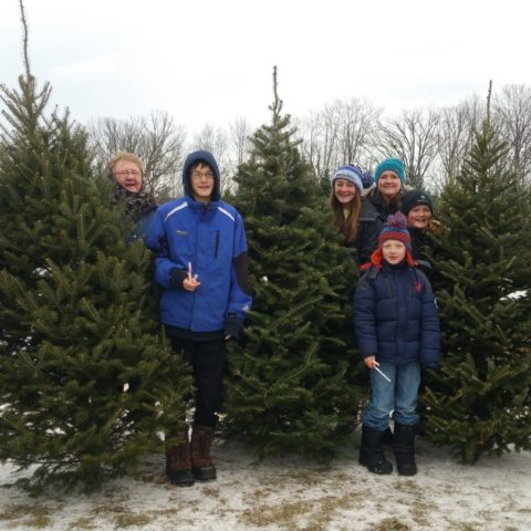 Choose your perfect tree, then warm up by the fire with some hot chocolate!  Open day after Thanksgiving & wknds thereafter: 10a-dark. - Fairfield Tree Farm Minnesota Grown