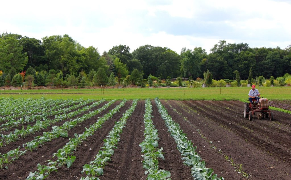 Farmers on tractor in field.
