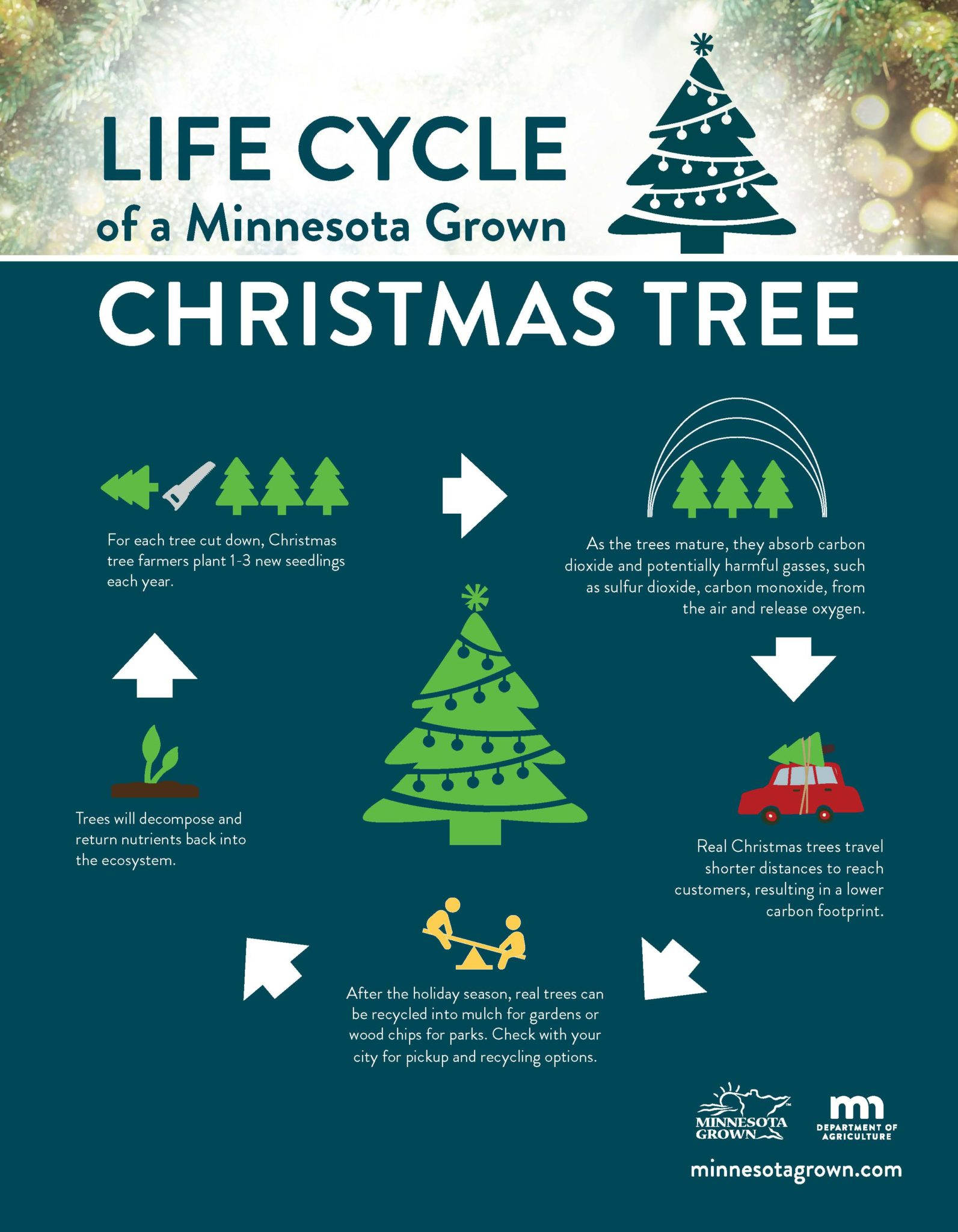 Minnesota Christmas Tree Life Cycle COPIER 10.22.18