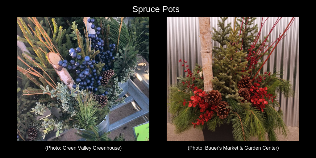 Spruce pots showing tree tips, pine cones, berries and birch arranged in pots