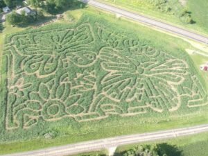 Aerial view of butterfly corn maze