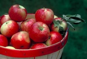 Minnesota Grown apples in a basket