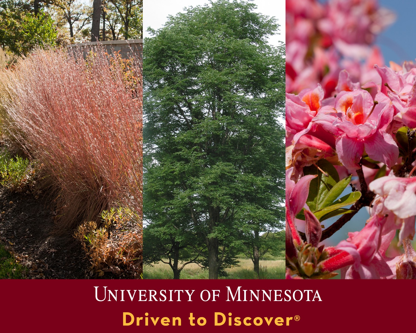 three snapshots of trees. tagline University of Minnesota driven to discover