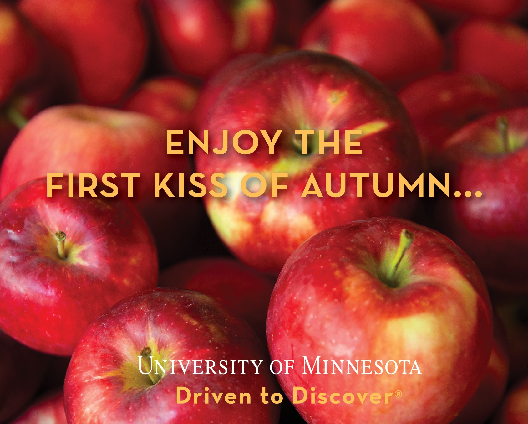 Red apples in the background with the tagline Enjoy the first kiss of autumn. University of Minnesota.